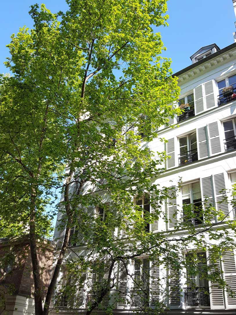 Le-platane-rue-coetlogon-Paris